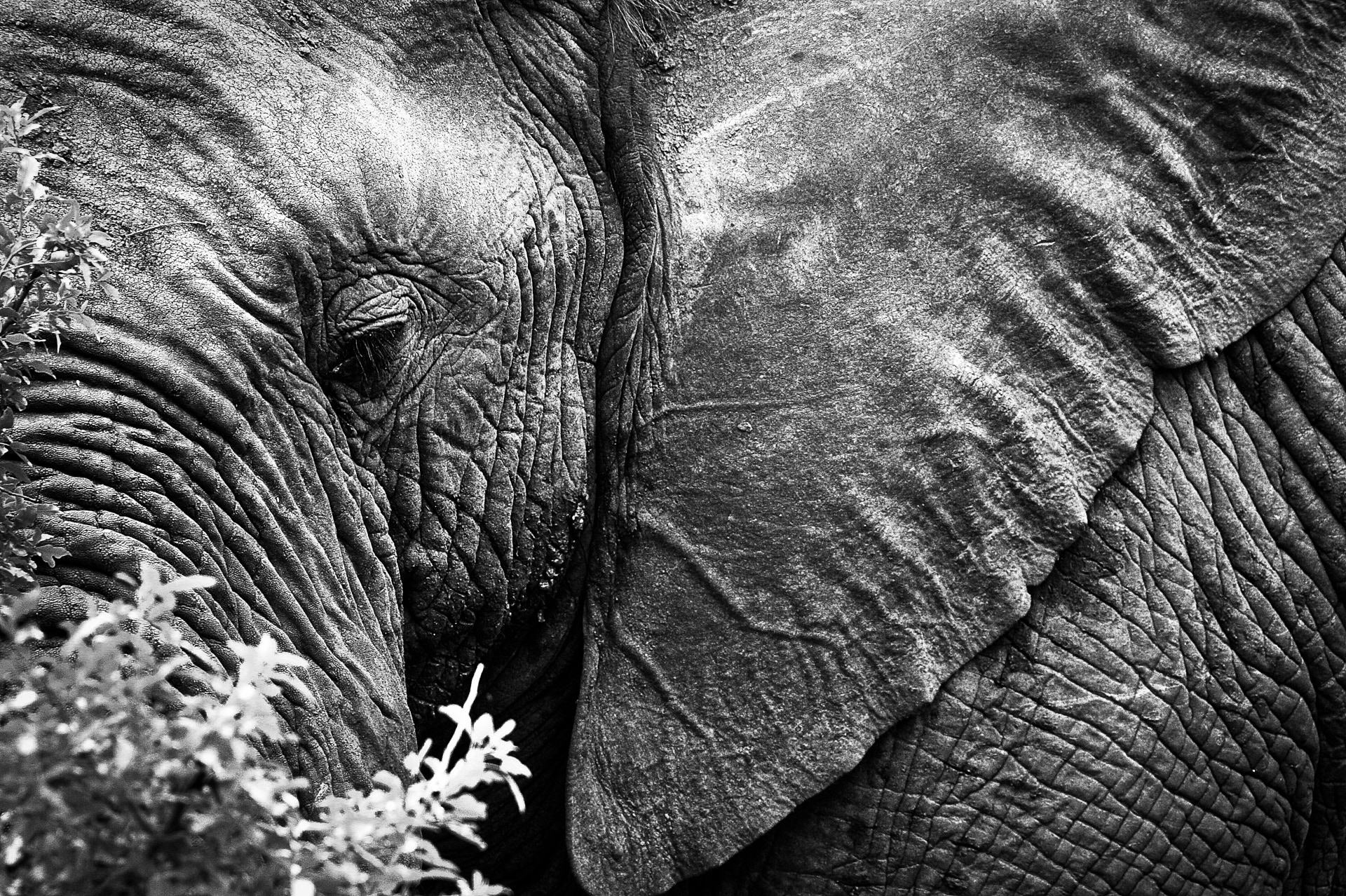 SOUTH AFRICA: MONOCHROM